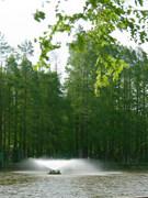 新緑に噴水