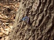 樹の幹にとまる蝶