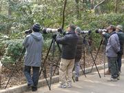 公園のカメラマン達