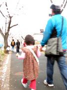 桜の下を歩く