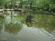 哲学堂の池