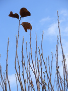 冬空と新芽