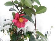 雪の下赤塚2012-2