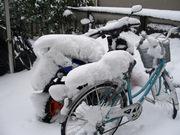 雪の下赤塚2012-3