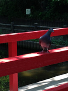 欄干にとまる鳩
