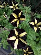 奇抜な色合いの花