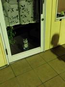 留守番は猫