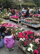 農業祭りの植木市