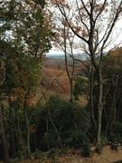 ブリューゲルの森
