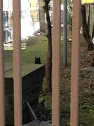 原宿路地裏の猫