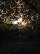 日暮れの公園