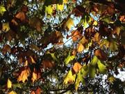 初冬の木々
