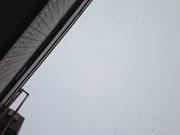 下から見る雪