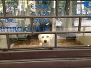 洗濯屋の犬