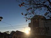 haiku_yugure15.jpg