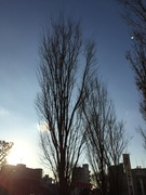 すっかり葉の落ちた木立