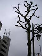 雨空の街路樹