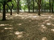 木漏れ日2009