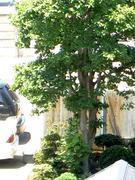 真夏の街路樹