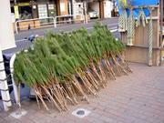 道端の松飾り売り