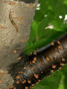 桜の木に這うナメクジ