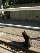 晴れ間の黒猫