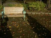 枯れ葉のベンチ