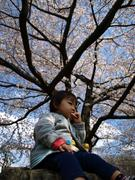 桜の下で2008