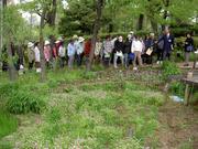 赤塚万葉植物園