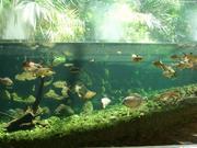 水族館大水槽