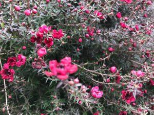 とげとげの花