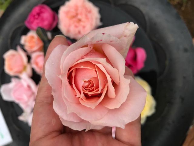薔薇の匂い