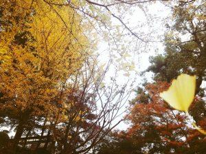 裸木となる日の近し風強し