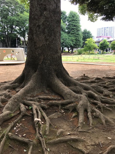 木と化せし蛸は強固に足を地に