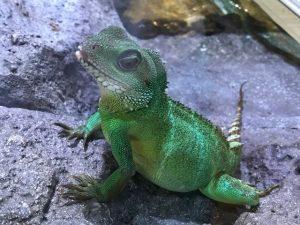 夏向きの色はこの色爬虫類
