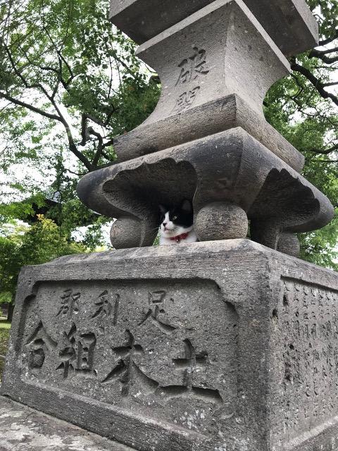 燈籠を守る猫ゐて恙なし