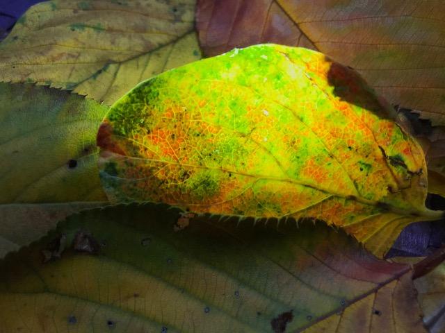 ミサ曲流る落葉は光る色硝子
