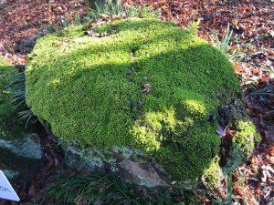 永き日の亀石苔の生す背中