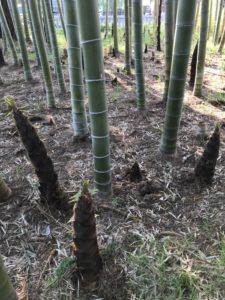 竹の子の身丈に合はす防護服