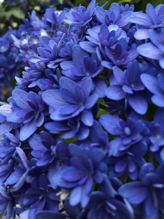 紫の上夏風邪を召されしや