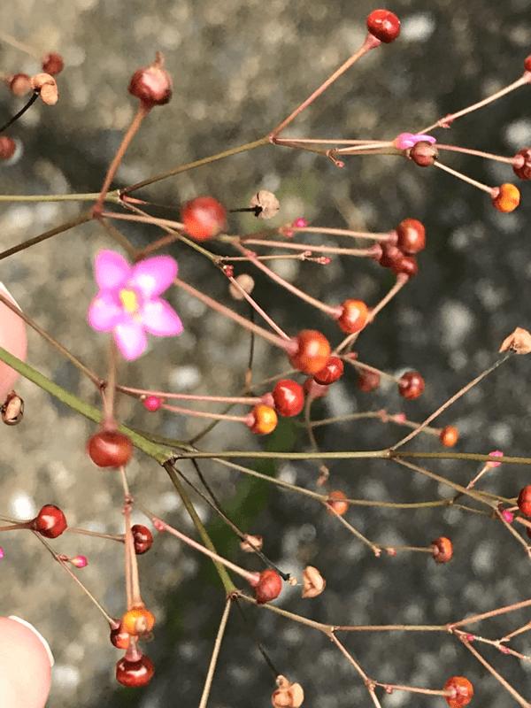分子構造模型に細工夏の花