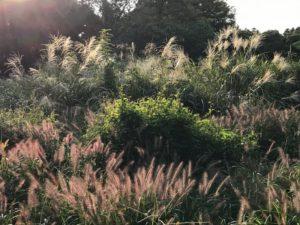 冥土への入り口塞ぐ秋の草