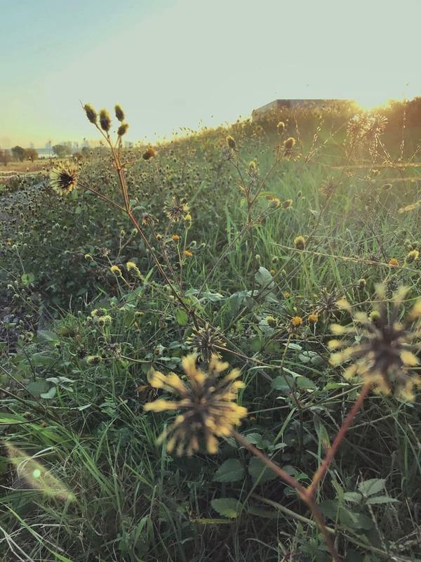 朝日射す降誕祭の日の荒野