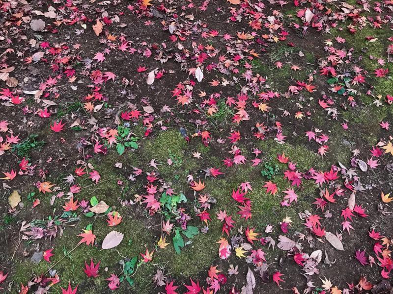 ゆく年や花道花に飾られて