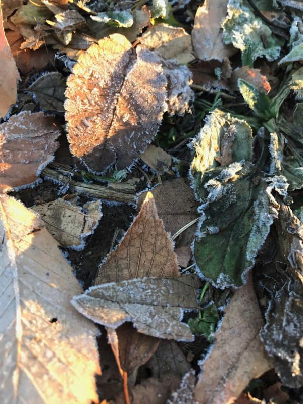 冬日差縁側で食ぶ砂糖菓子