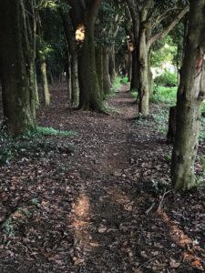 木下径つづく公園晩夏光