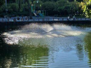 鯉跳ねて飛ばす飛沫の澄めりけり
